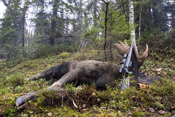 Moose and sauer 404 XTC nordguide